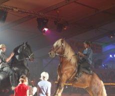Festi Cheval