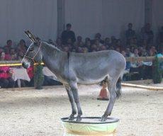 Festi Cheval 2014
